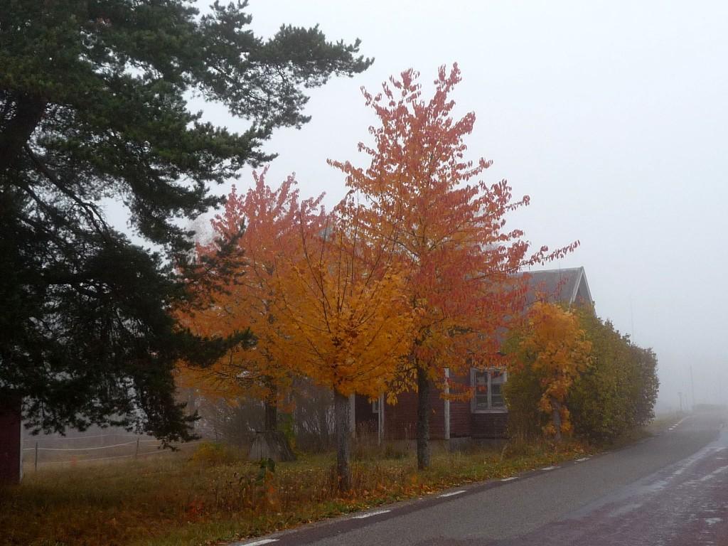 Höstträd i dimma