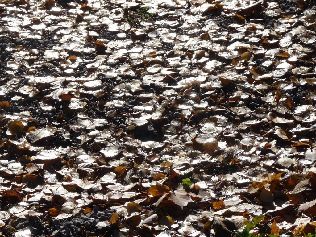 Löv i motljus