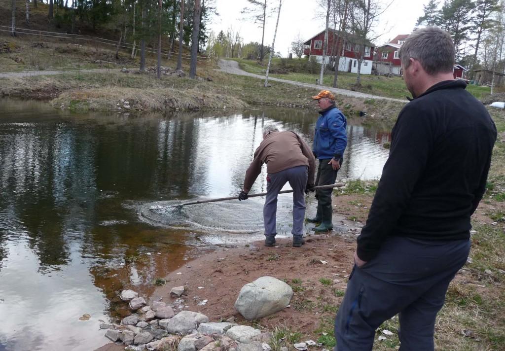Fiskleverans4